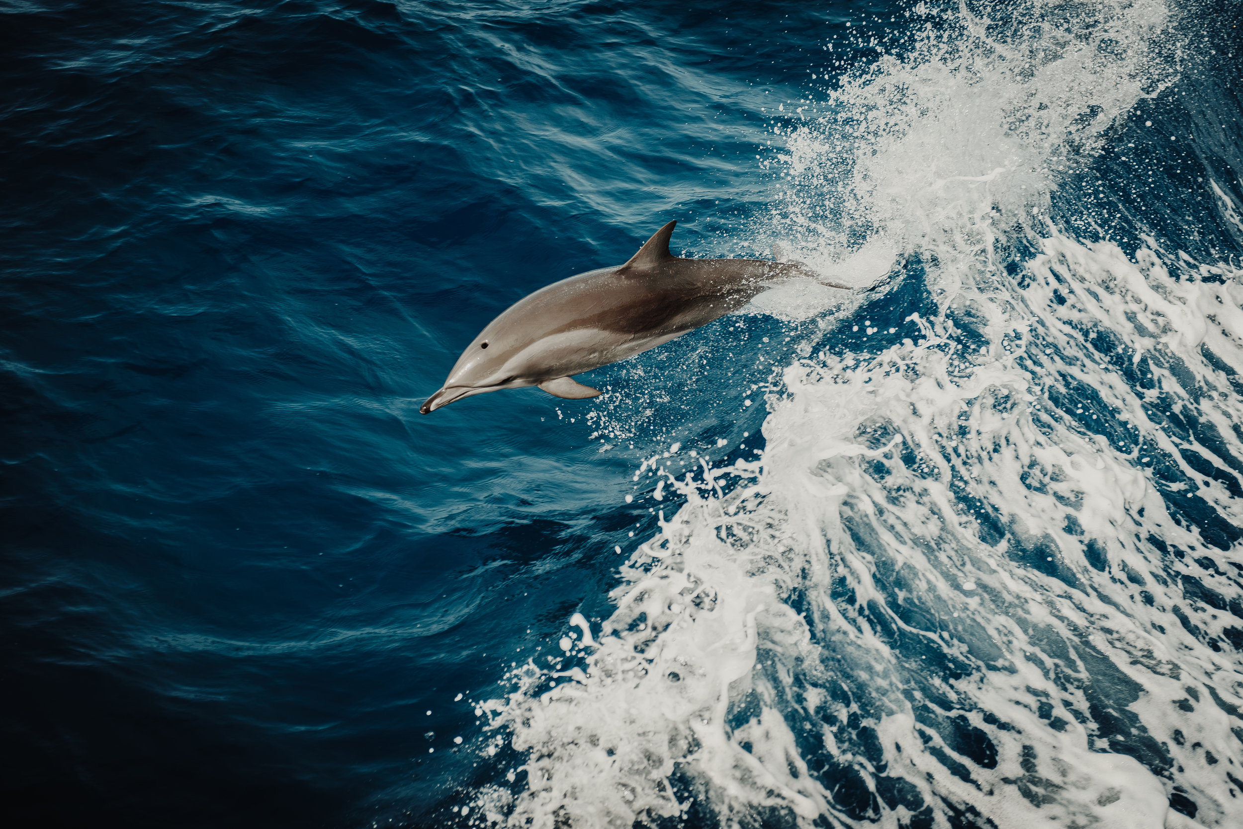 Be at peace with this dolphin photo. You can reach out to us and we will resolve your PR issues.