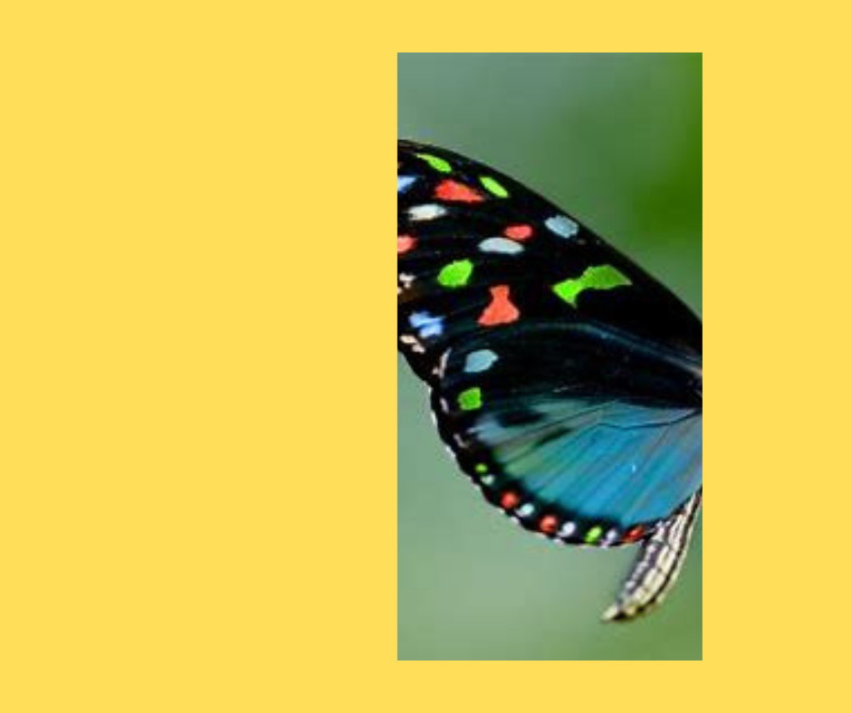 landing page butterfly.png