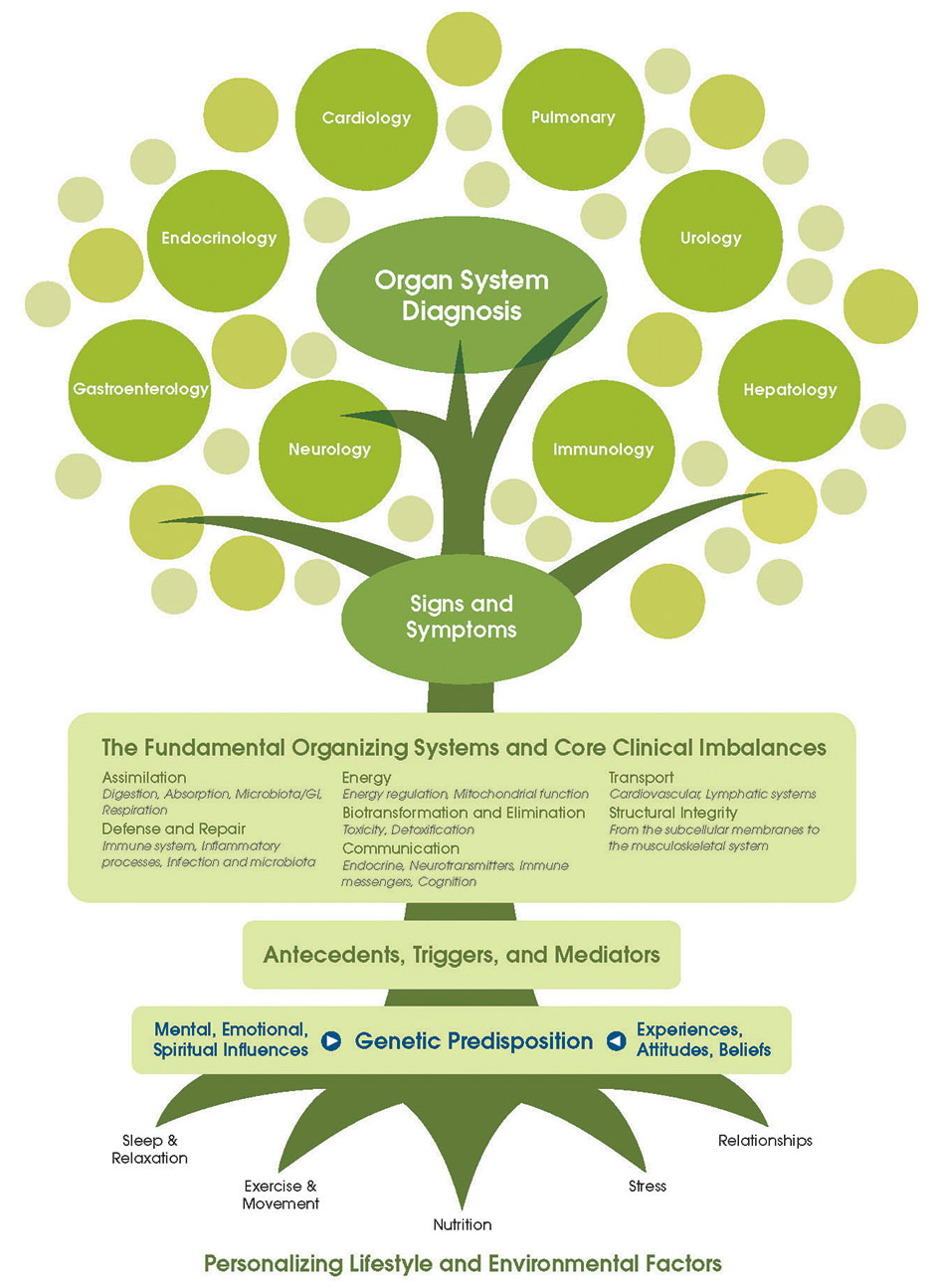 "Click image to be brought to a large readable PDF of ""The Functional Medicine Tree"""