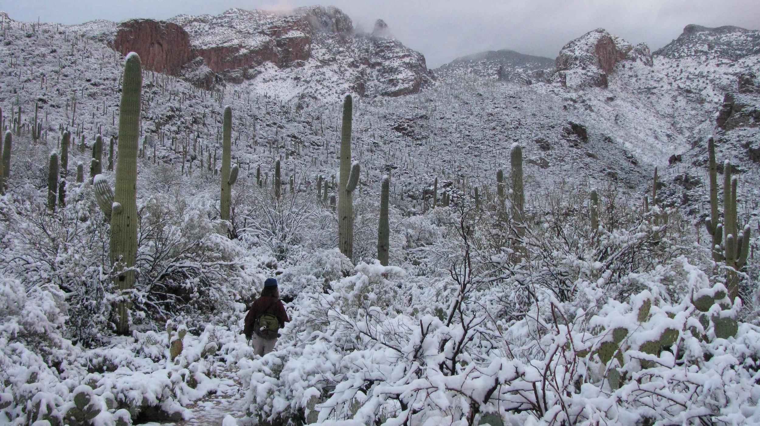 Snow in Pontatoc Canyon - Feb 2013.jpg
