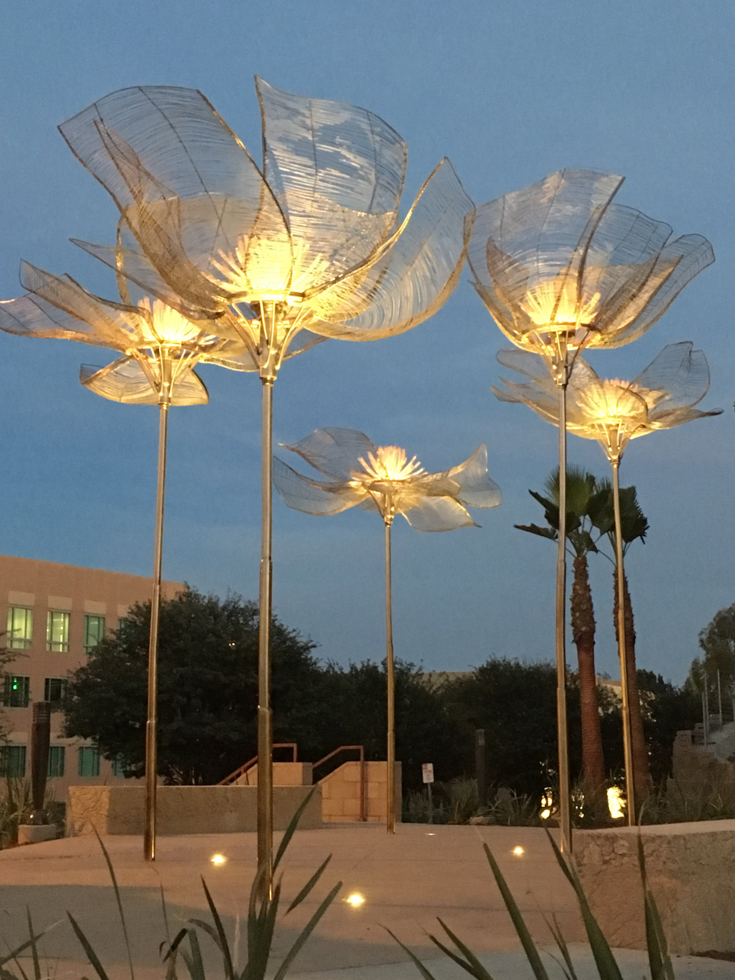 windflowers-dusk.jpg