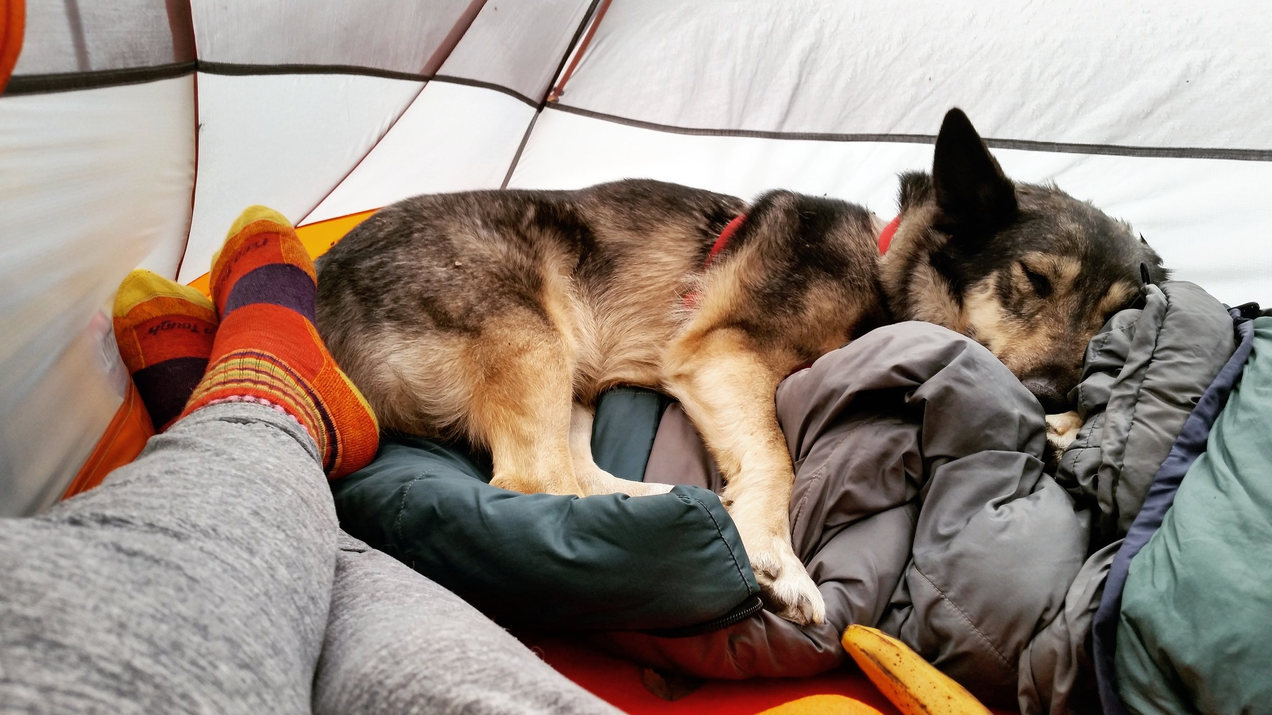 adventure dog ava sleeping on a sleeping bag in a text in norway