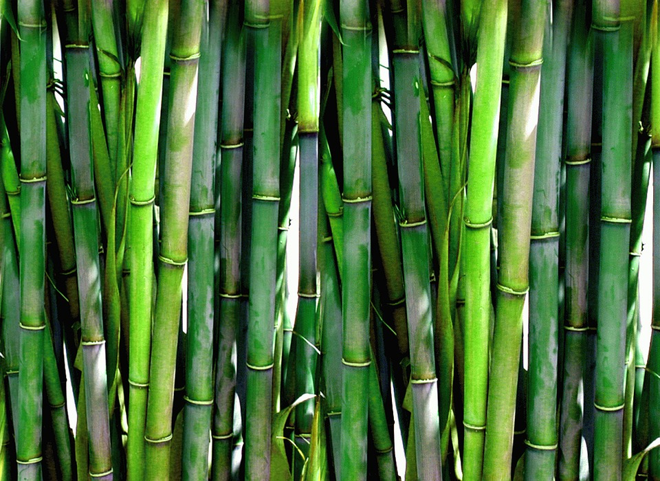 Photo: https://pixabay.com/photos/bamboo-forest-green-plant-wood-20936/