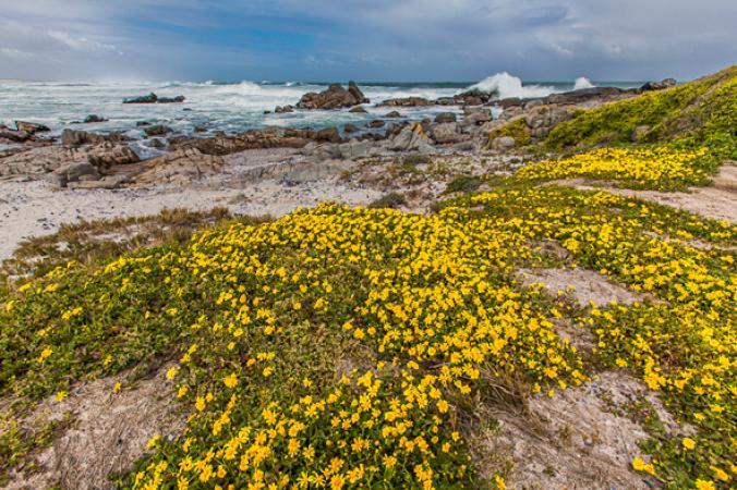 flowering-dunes-south-africa.adapt.676.1.jpg