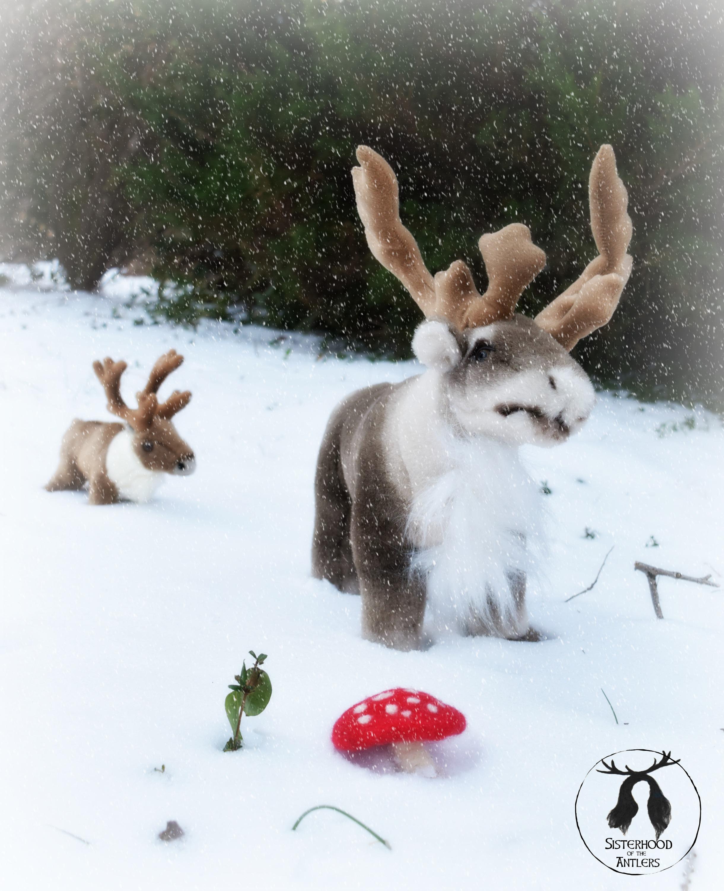 The Sisterhood of the Antlers Reindeer Herd!