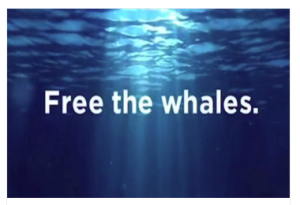 free the whales.png