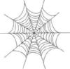 spiders web.jpeg