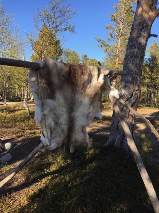 Reindeer pelt at Saltoluokta, a Sami summer settlement in northern Sweden near Arctic Circle. With Sami elder, Laila Spik.