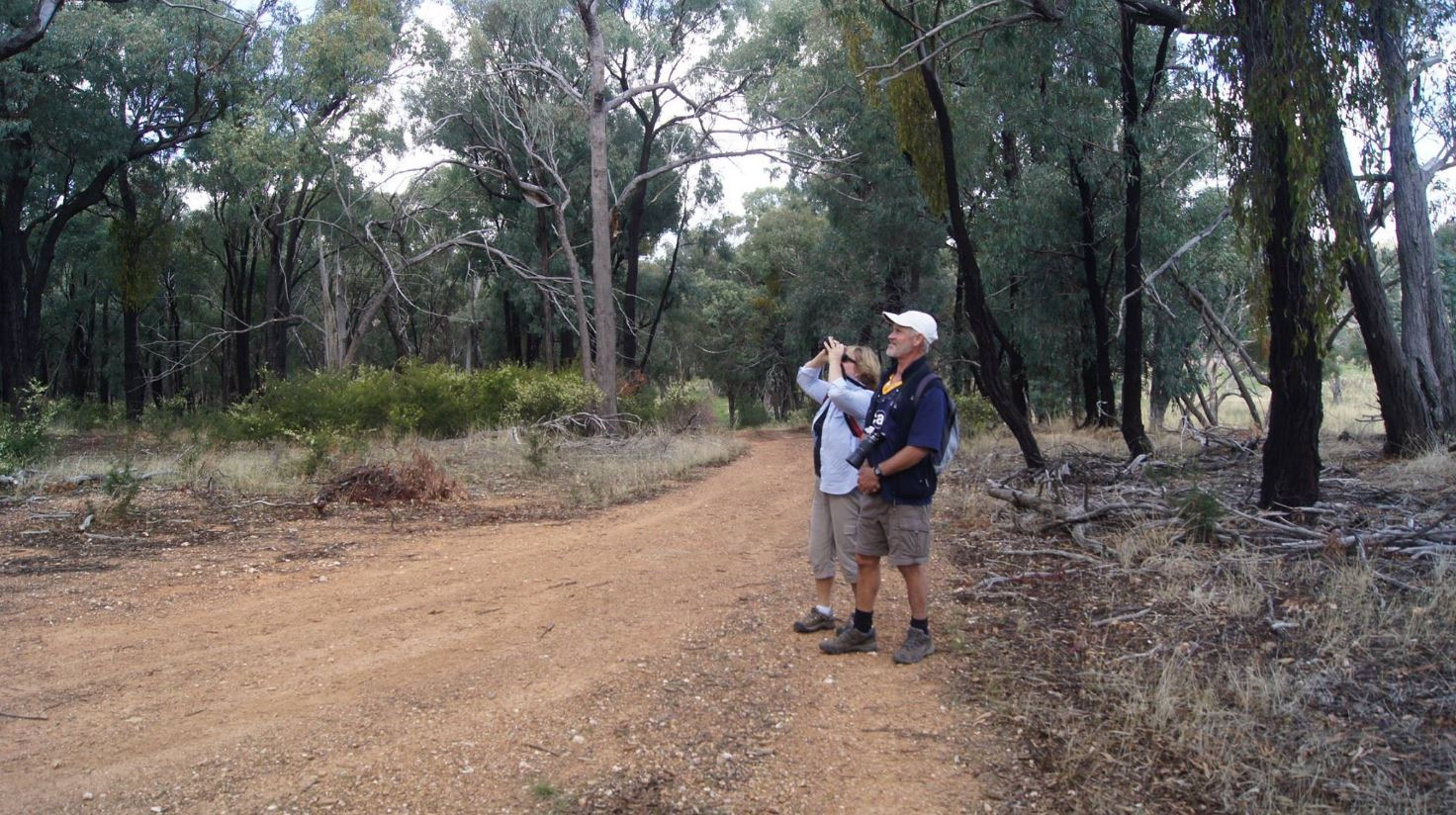 Jindalee National Park  Photo Credit:   Phill Bowden