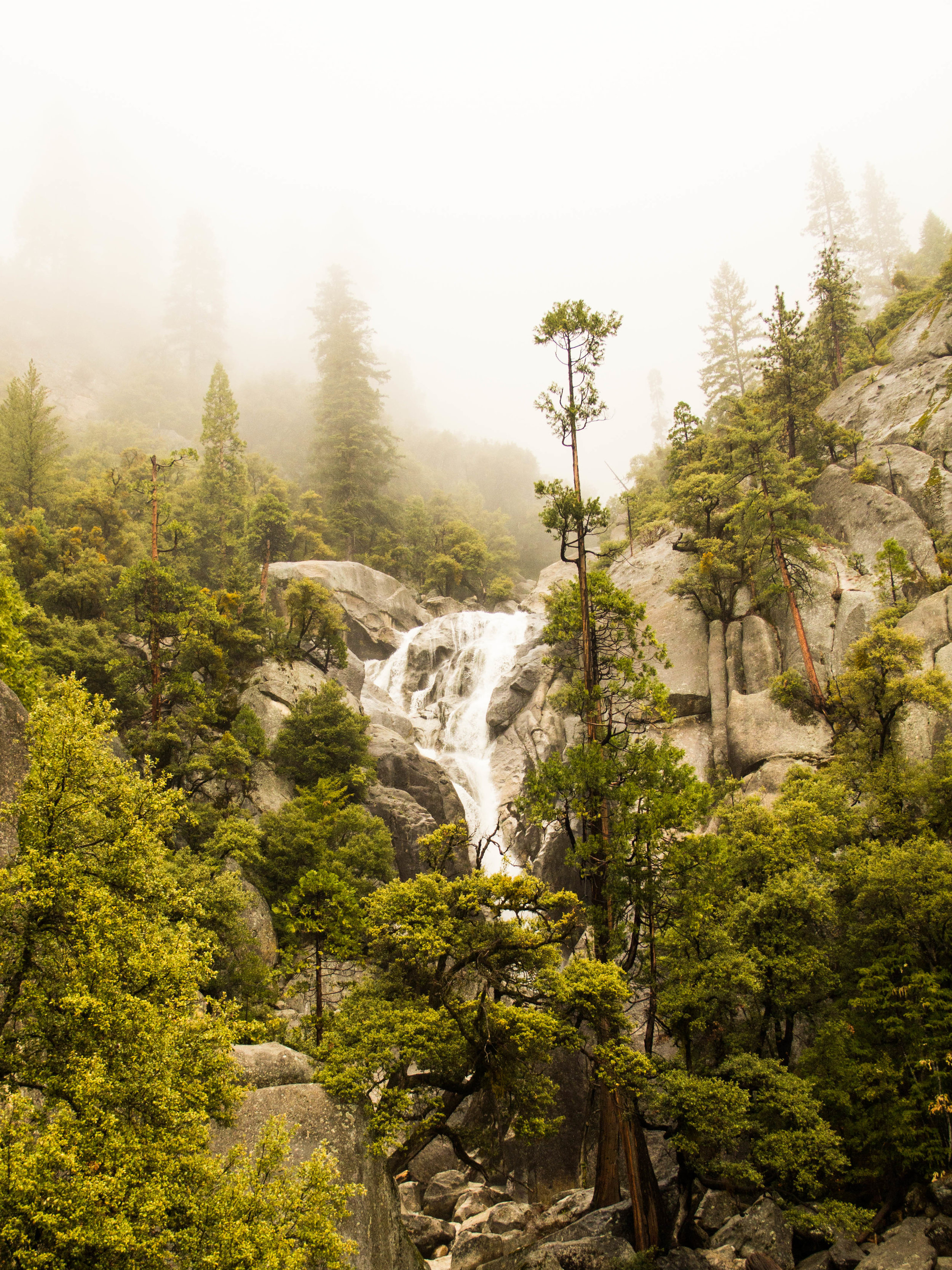 Foggy day in Yosemite in the winter months with beautiful green trees and landscaping