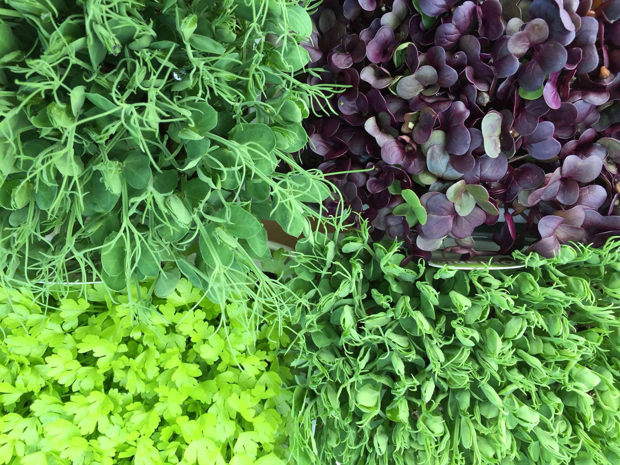 Organic Herbs & Seedlings