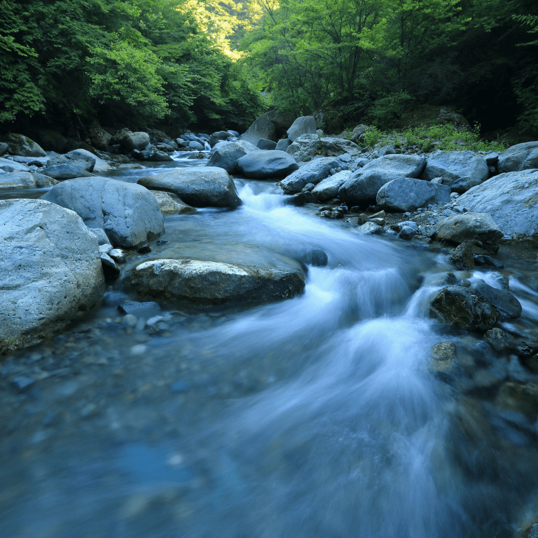 Help restore the quality of our New Zealand rivers