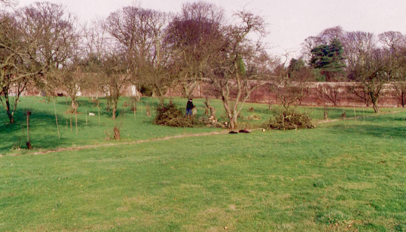 AT THE BEGINNING – SOME OLD APPLE TREES BEING REMOVED IN 1994