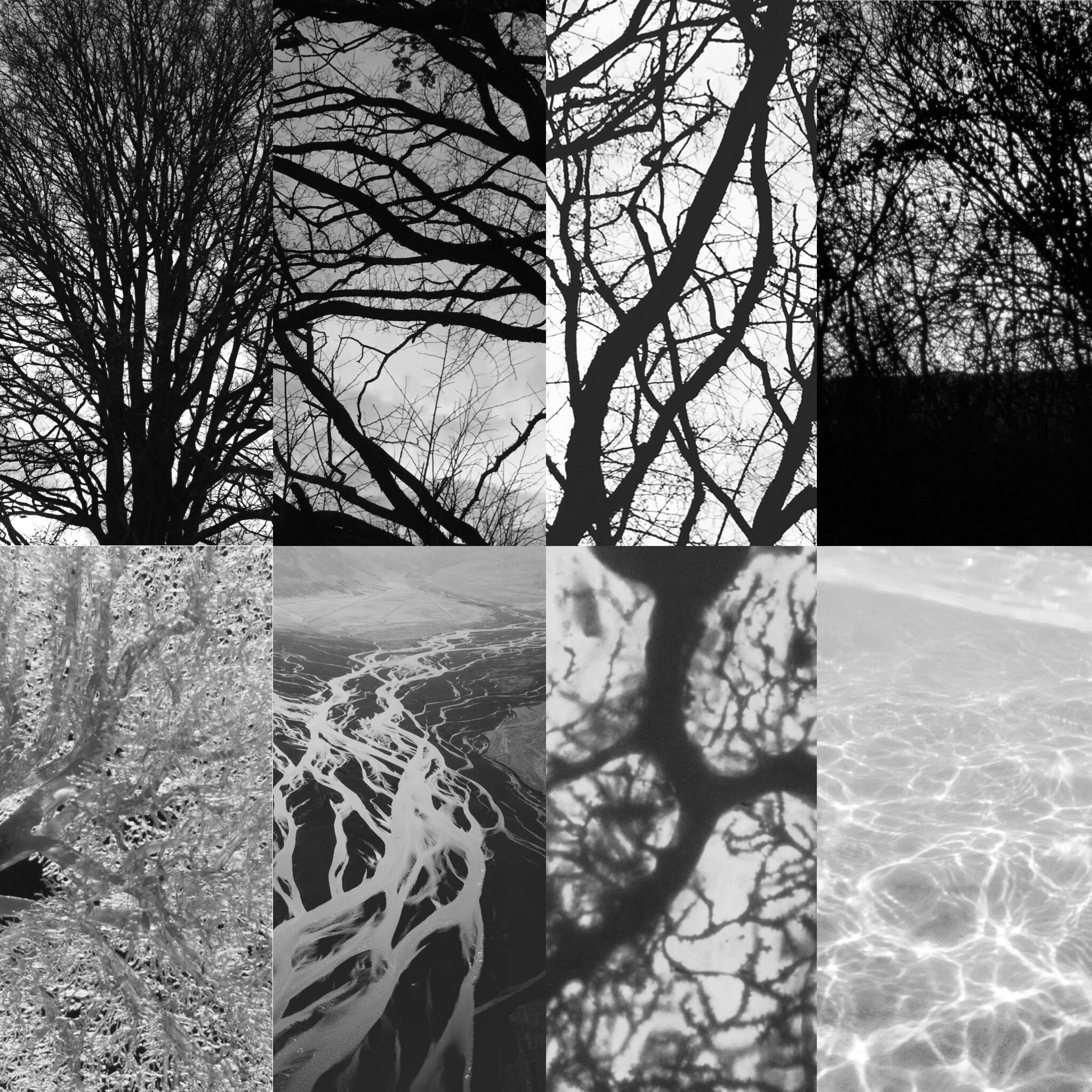 Top Row: Trees in the park,  Lower Row (Left to Right) Human Kidney circulation, River Deltas from the air, Purkinje cell (developing nerve cell) in a 12-month old, patterns of sunlight on sea-water