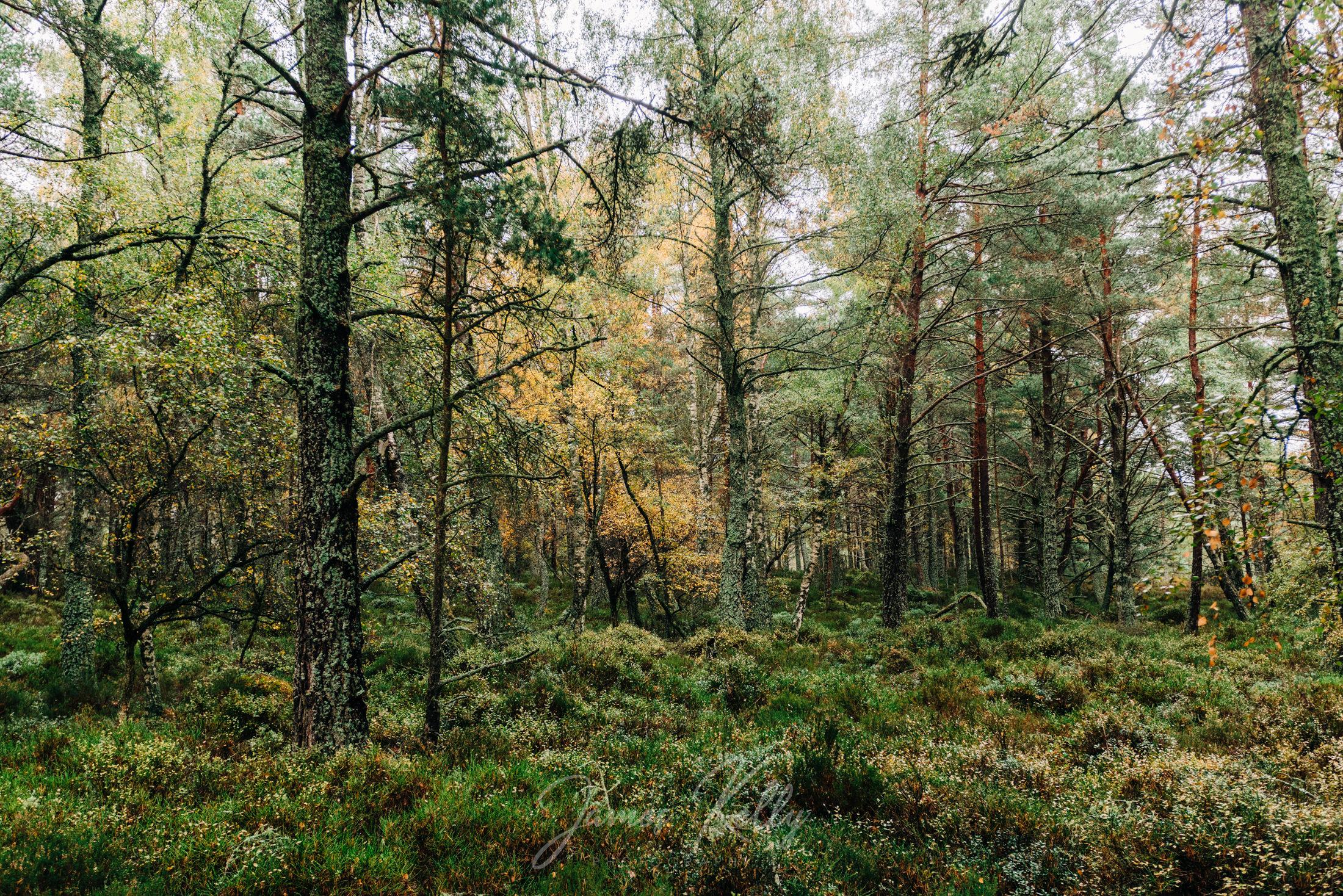 Loch_Morlich_181014_003.jpg