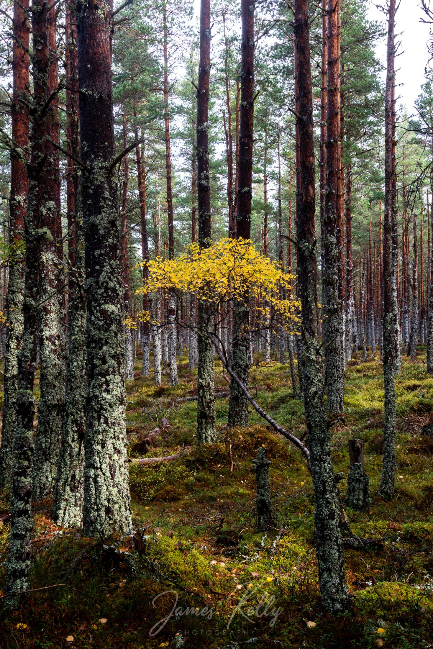 Loch_Morlich_181014_007.jpg