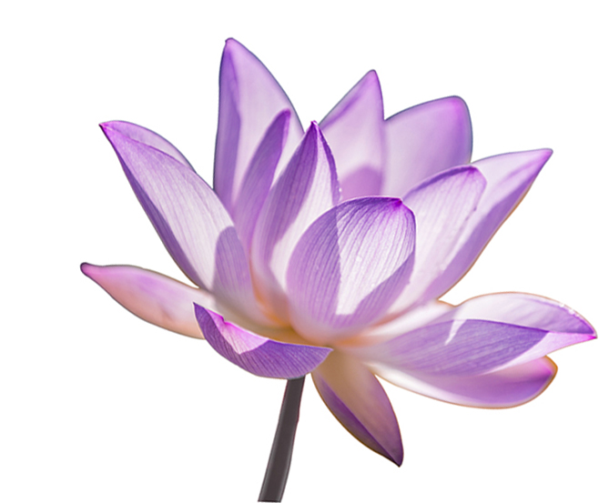"""""""Strength is also stopping to nourish, restore, and align yourself."""" - ~ Lalah Delia"""