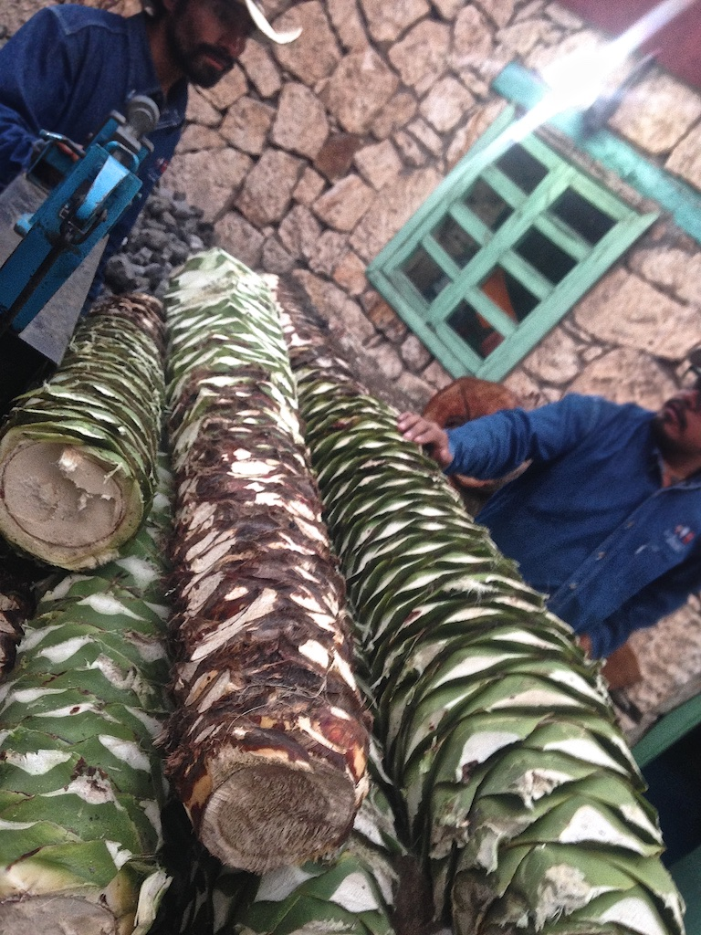 A group of farmers brings in a load of long, narrow Cuishe piñas for distillation