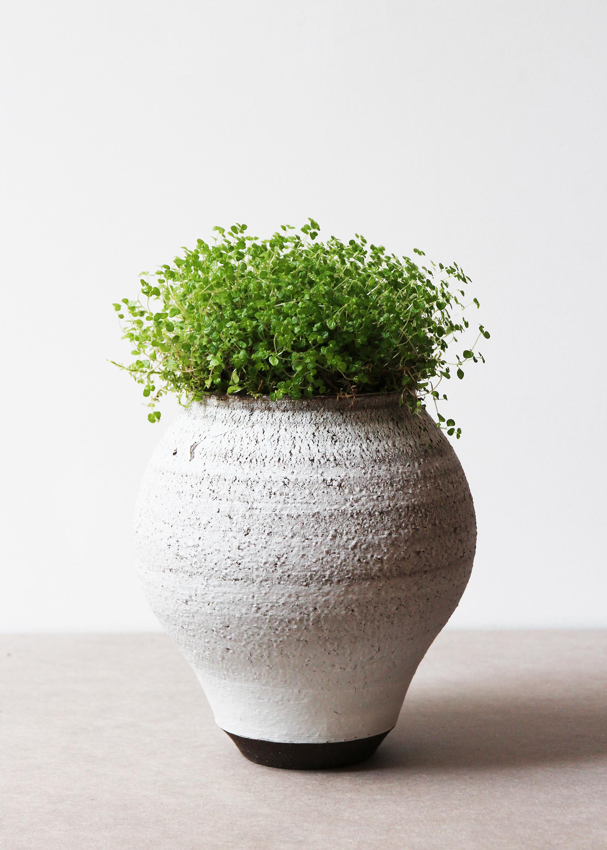 Vase  英国 UK, 2017