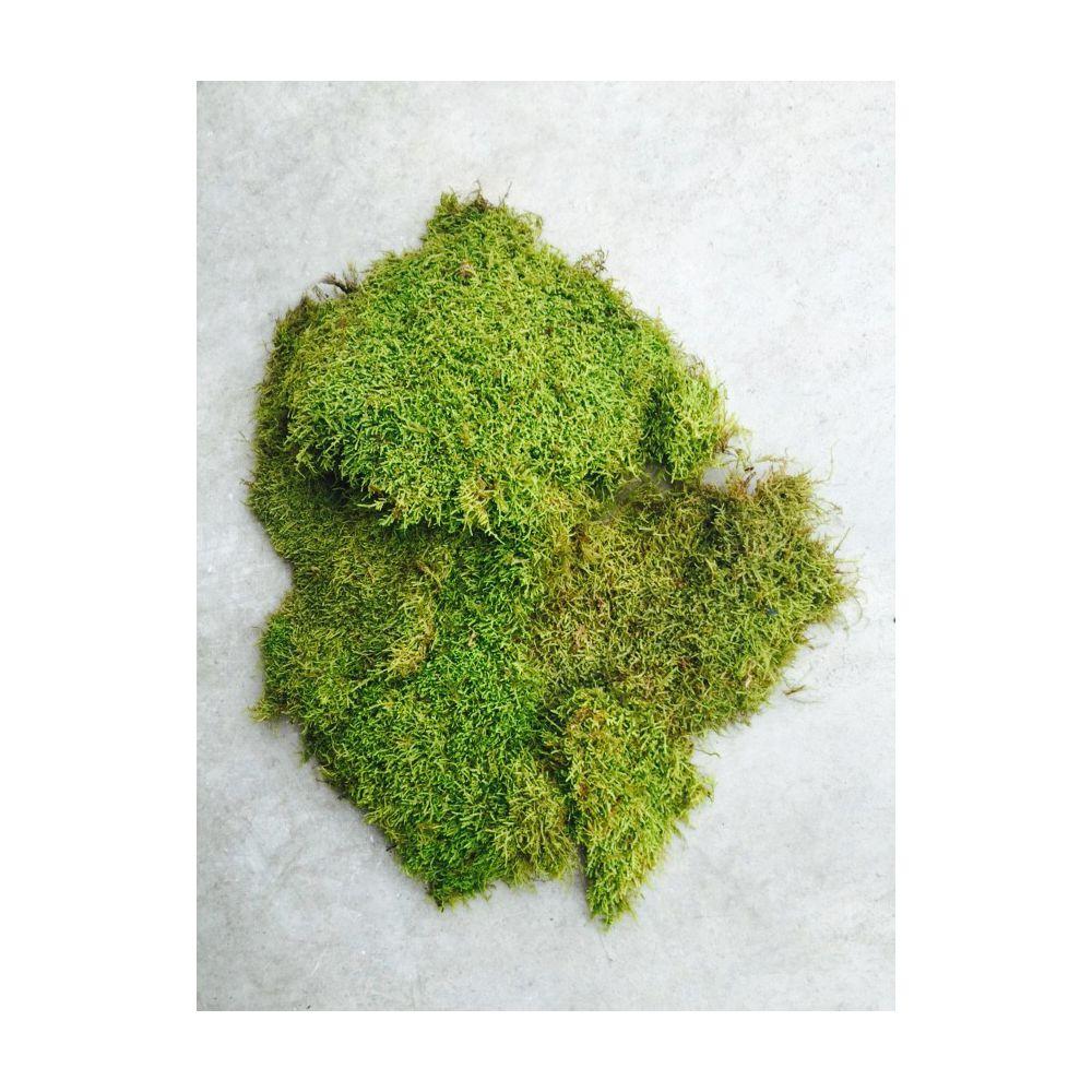 preserved-flat-moss-lime-green.jpg