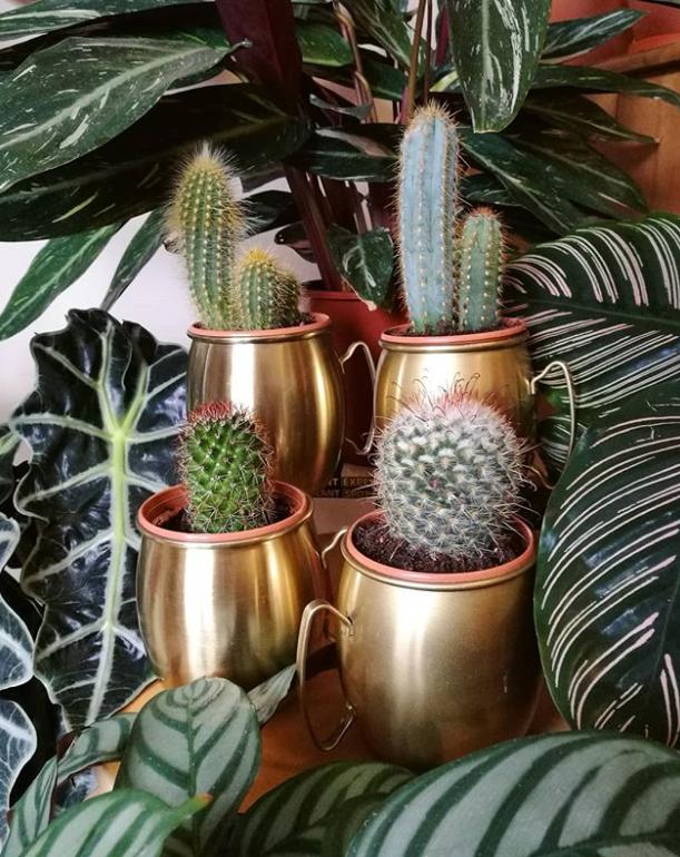 sap plants.png