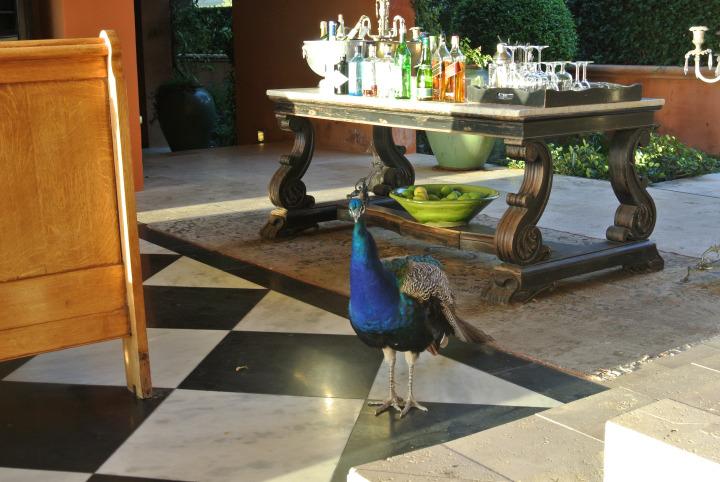 La Residence Peacock.jpg