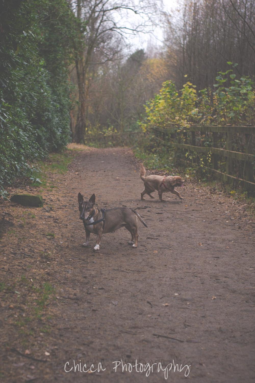 family-mobile-photographer-keighley-bradford-st-ives-wilsden-harden-5.jpg