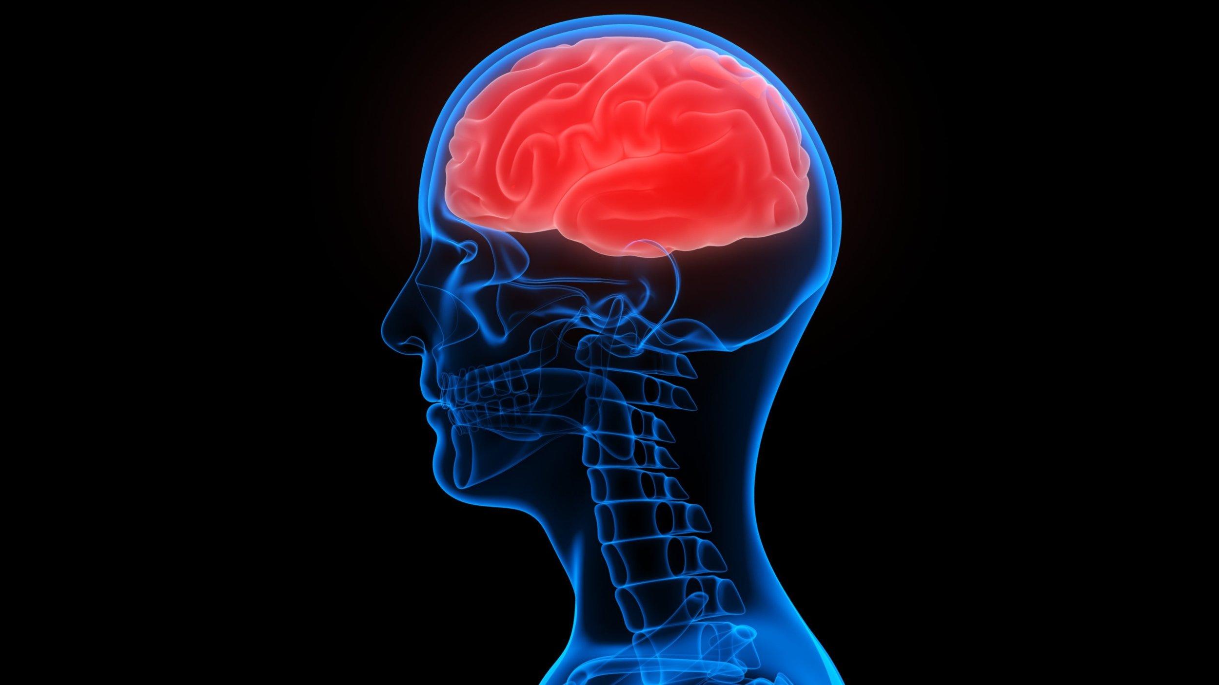 brain2_XL.jpg