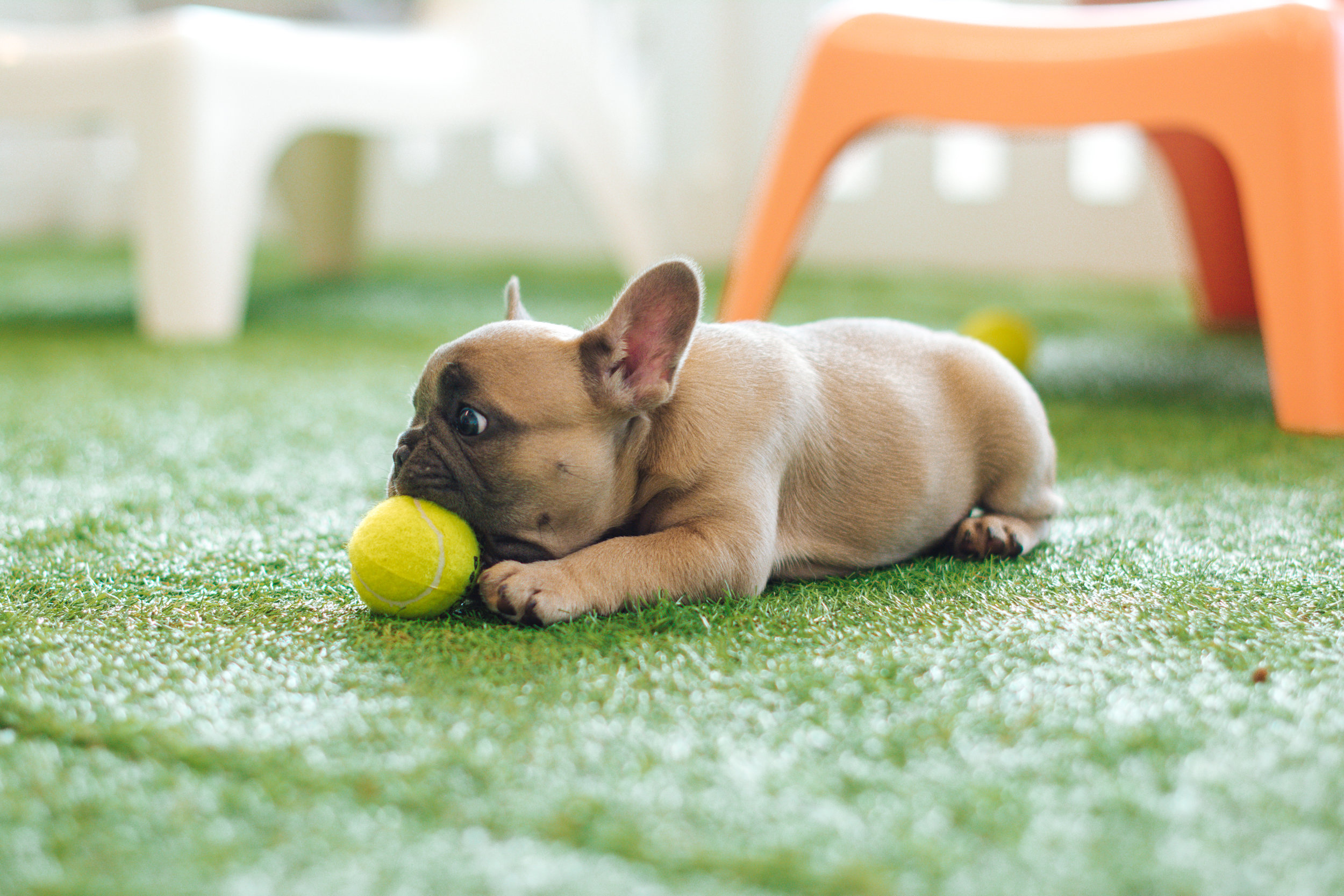 A puppy with a ball. Perfect.