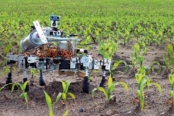 robo farm.jpg
