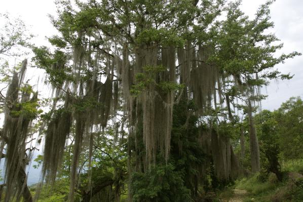 Tree tresses.jpg