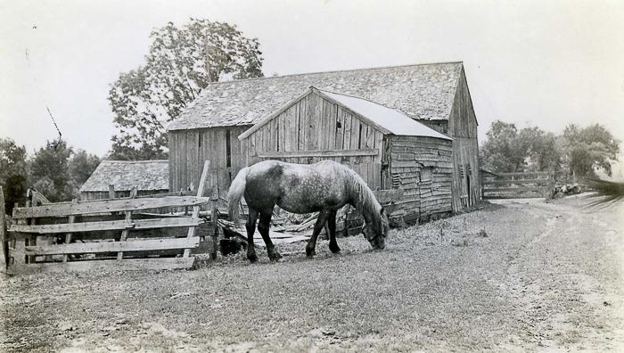 Bill Austin's colt, Austin farm