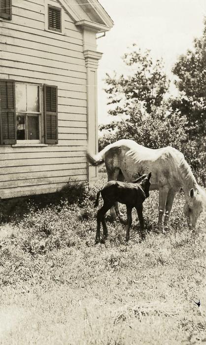 Bill Austin's mare & colt