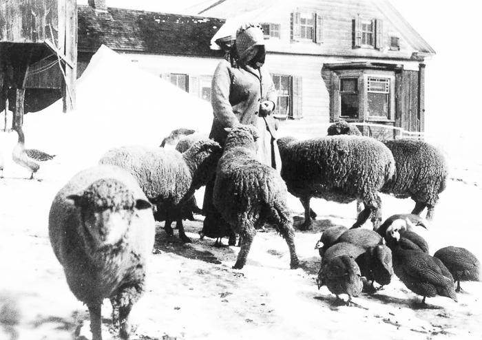 Woman feeding animals