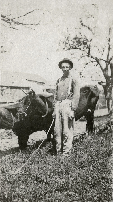 Adelbert Austin and oxen