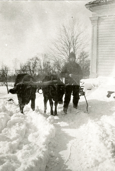 Snow scene with two oxen