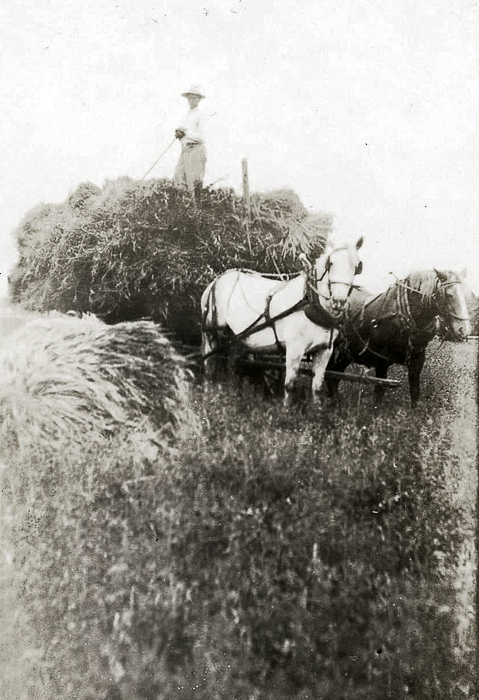 Gordon Hall & his team of horses