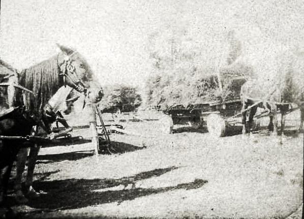 Horse drawn hay wagons