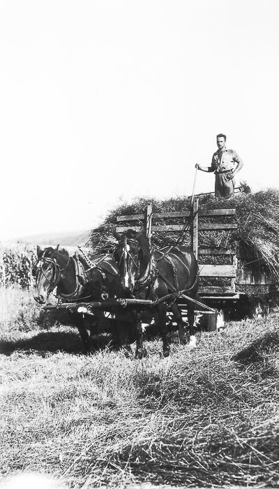 Elmer Phillips on Austin hay wagon