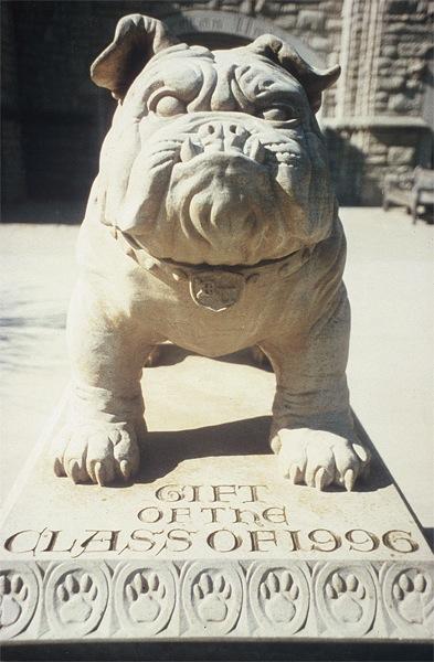 Butler University Bulldog