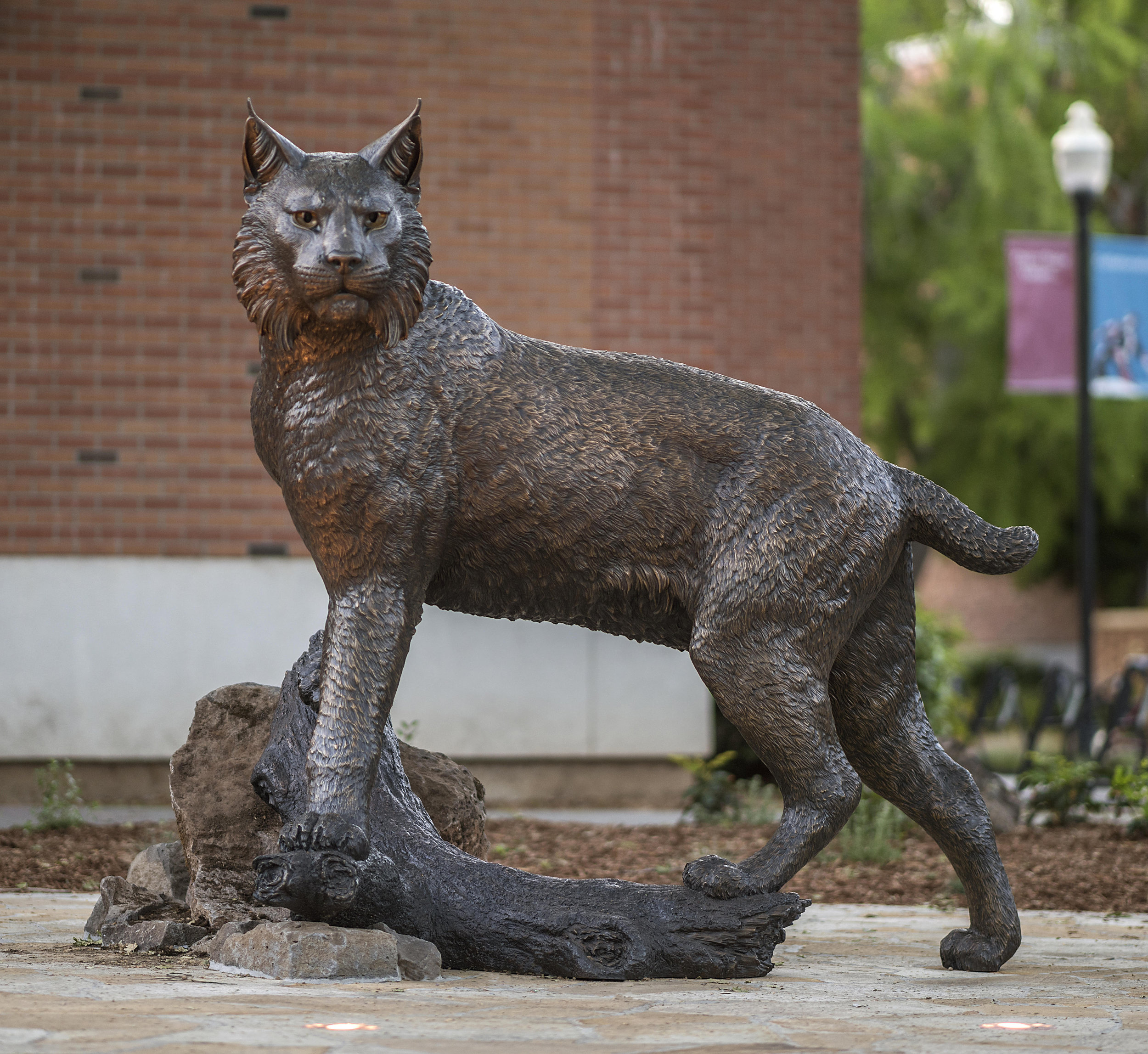 California State University Chico Wildcat