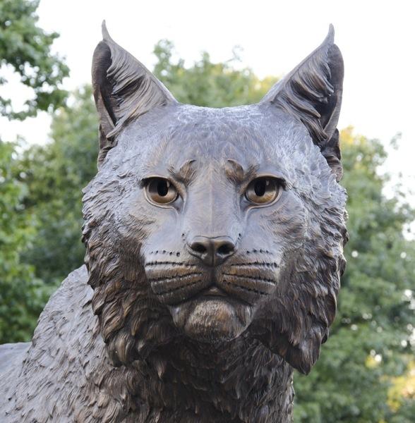 UK Wildcat - 3_moo-sb_Wildcat379_14_moo1-1p3_.jpg