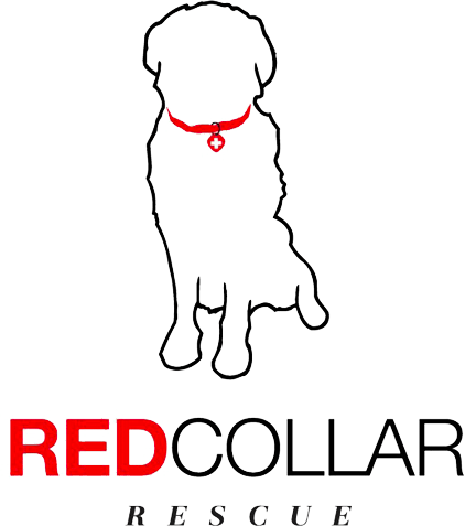 red-collar.png
