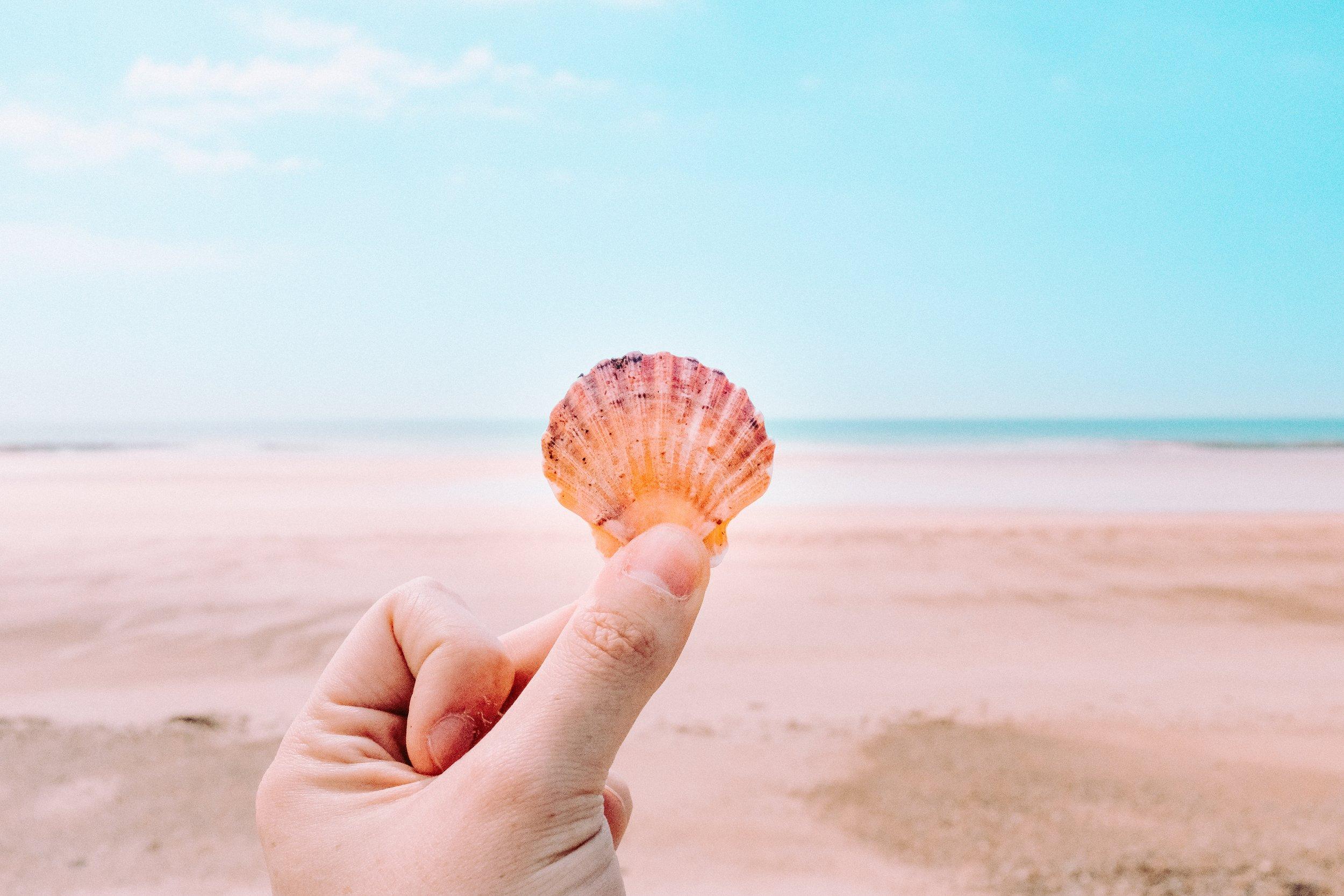 shell on pink beach