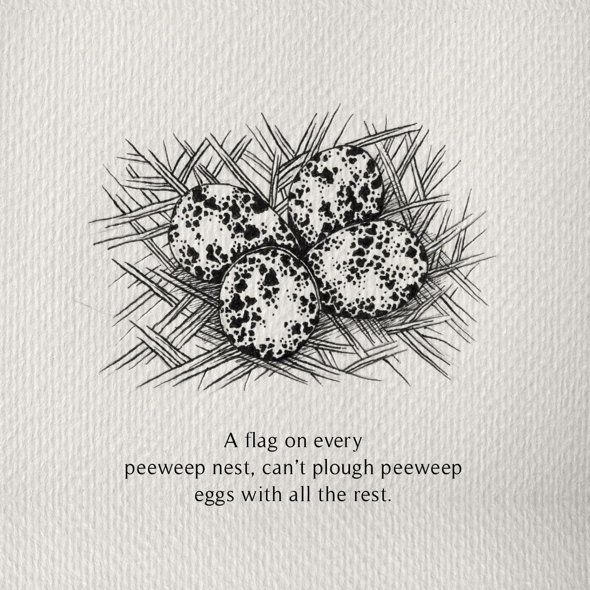 Peeweep.png