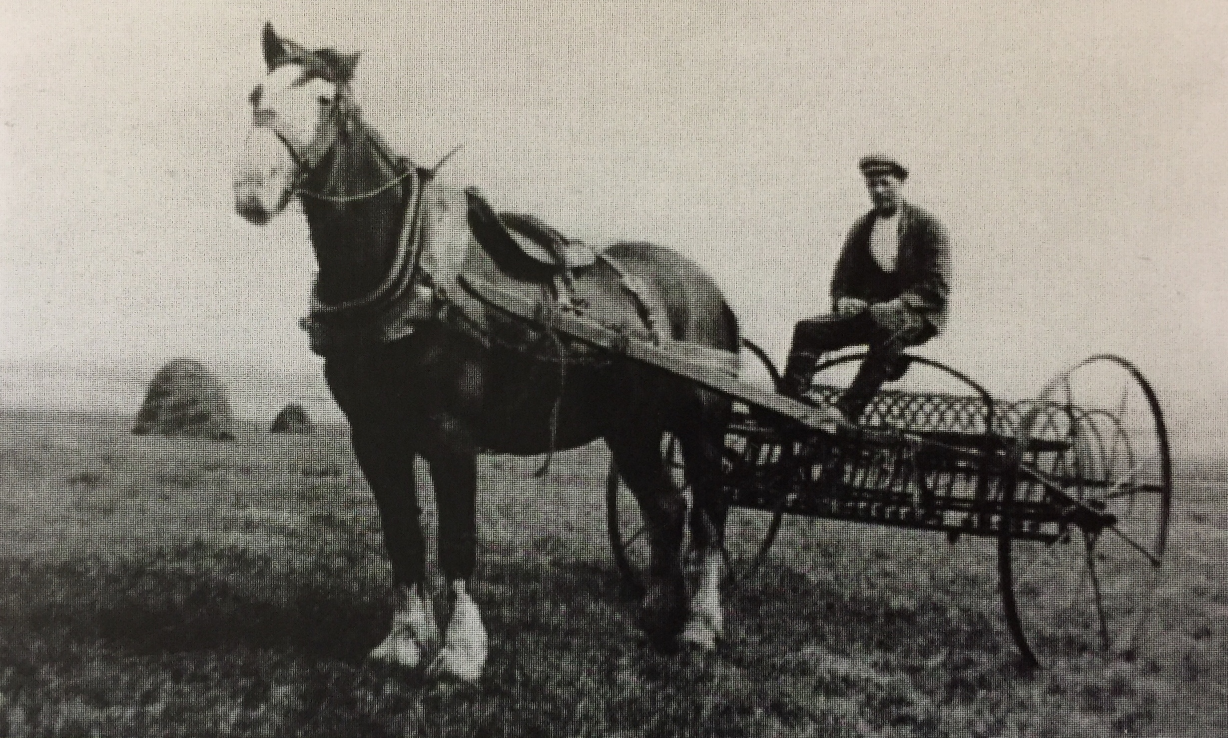 'Jimmy Struthers working the hay-rake 1940s; moorland beyond'. Photo: John Struthers from  From Peat Bog to Conifer Forest  by Ruth Tittensor.