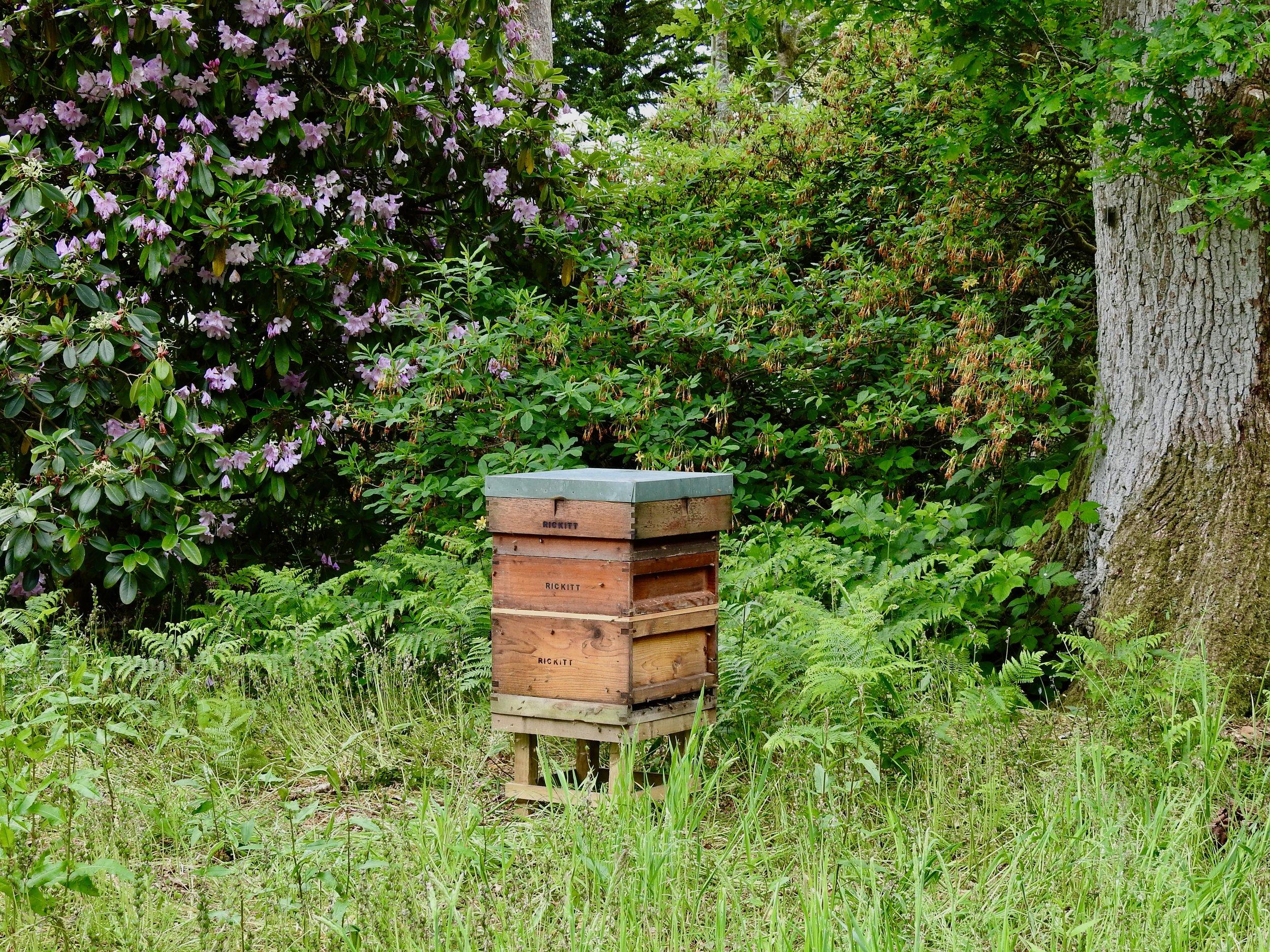The beehive under a Siberian spruce, Westonbirt Arboretum