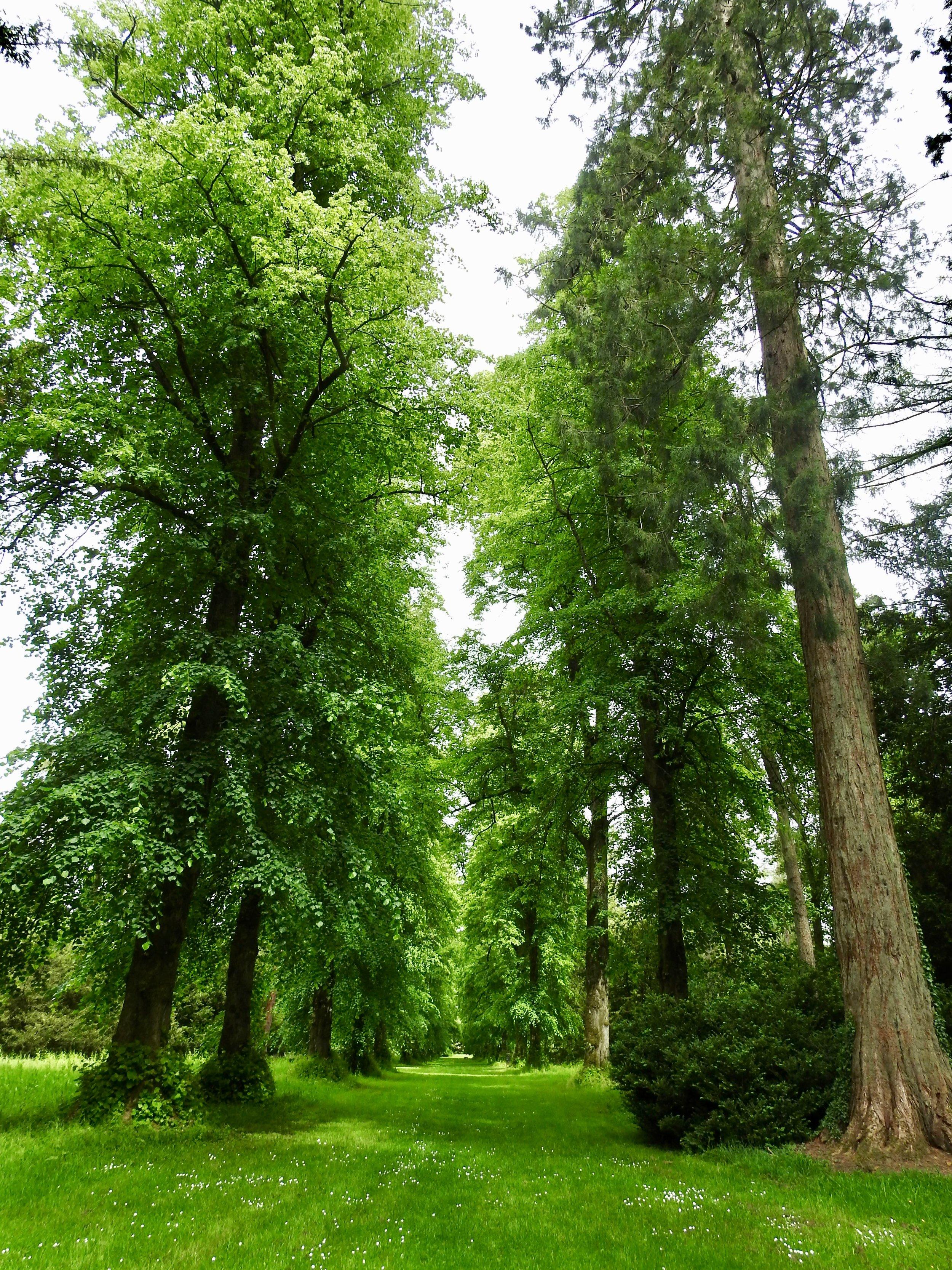 Avenue of lime trees, Westonbirt Arboretum