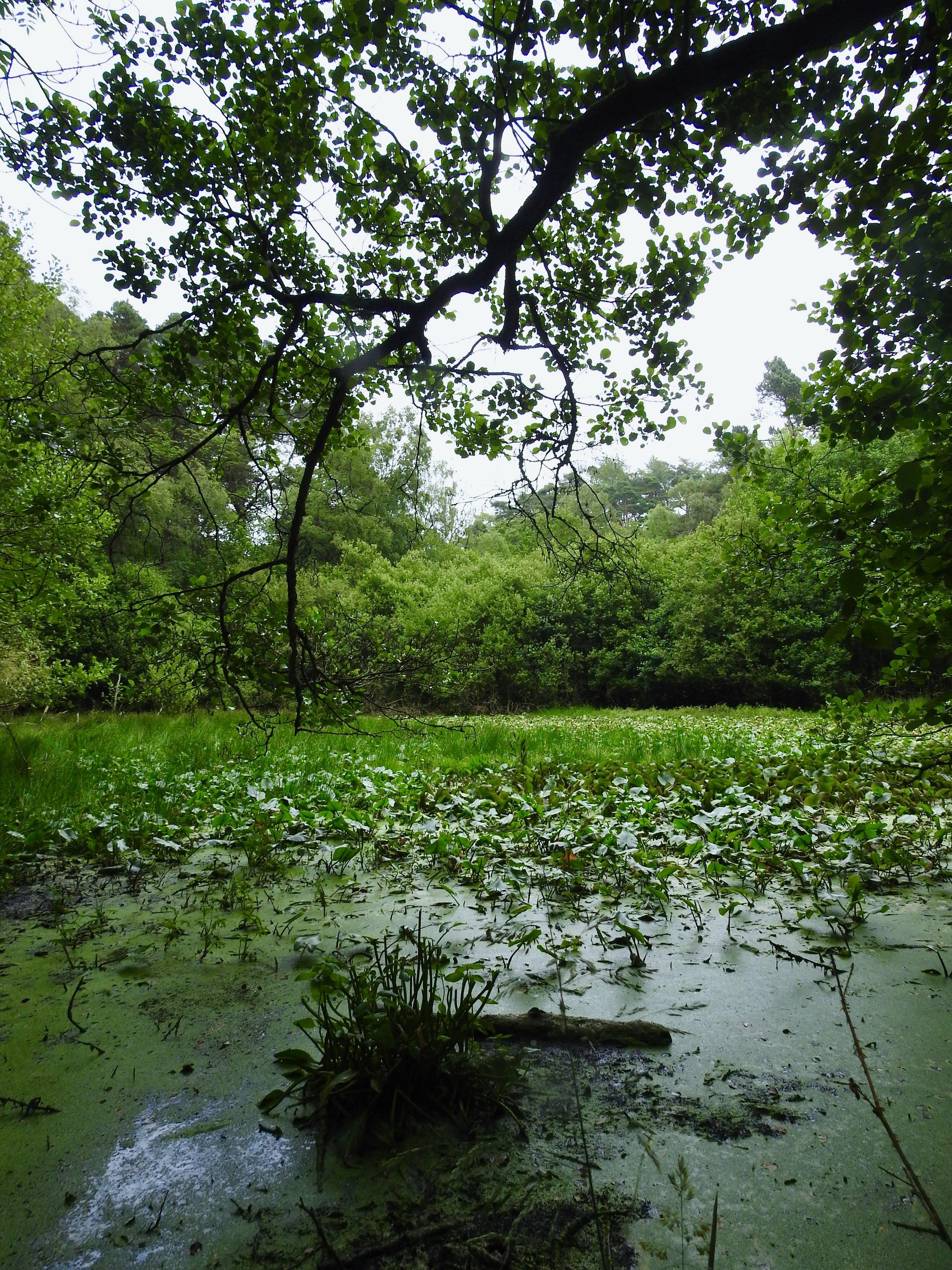 The enclosure pond