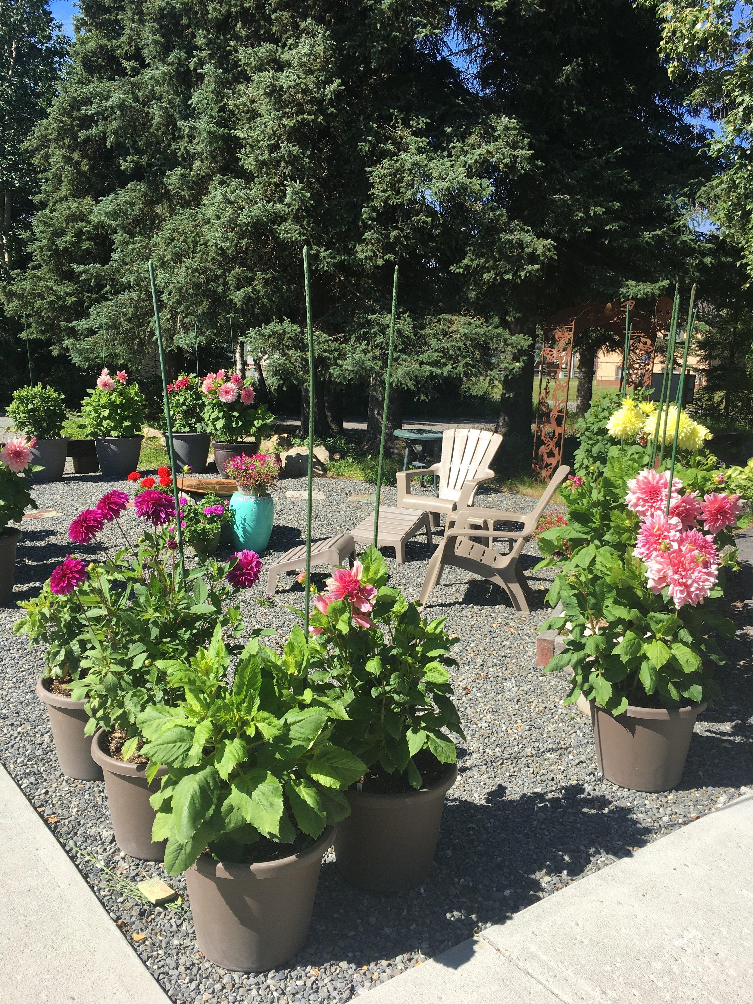 Our patio area and dahlia garden.